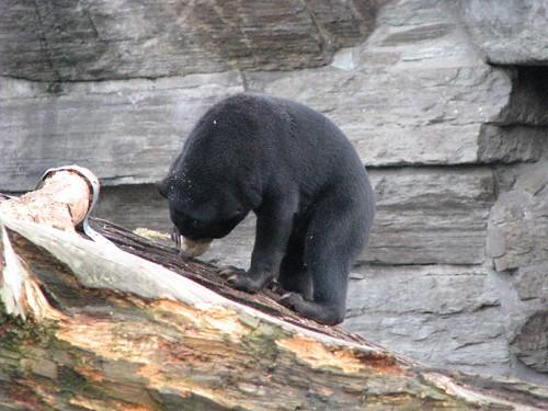 Zoológico alemão 4