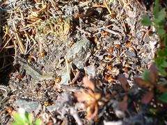 Ladybug colony