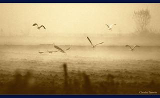 Un nuovo ritorno - Il volo nell'Anima