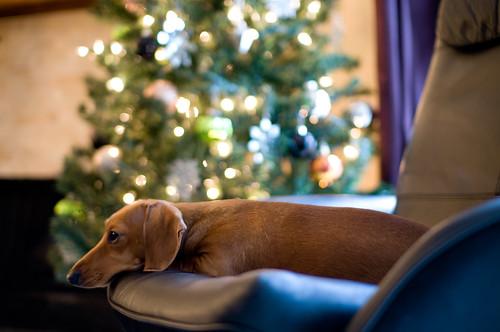 Lottie making Christmas