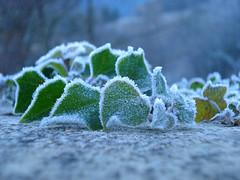 Rime - Brina (MarcoL) Tags: winter italy cold ice italia brina rime inverno freddo marche ghiaccio marches genga regionemarche sanvittore esino sentino fotograficamente