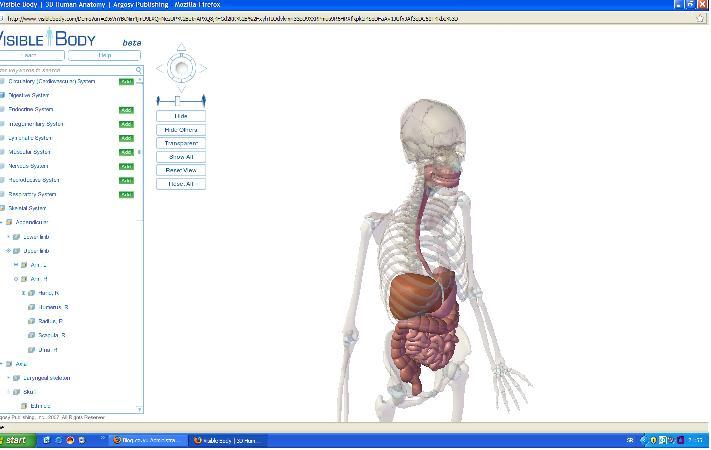 anatomija ljudskog tela