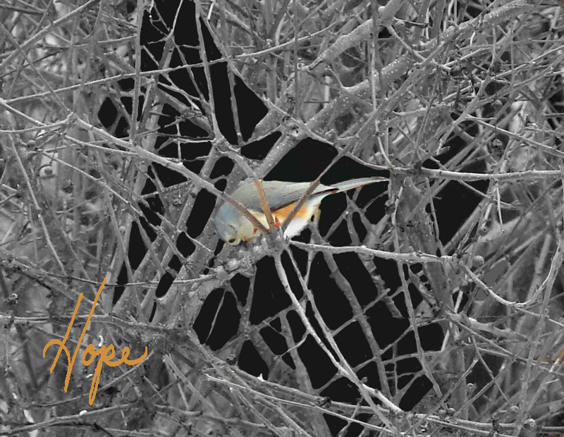 Bird-HOPE