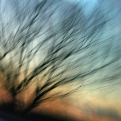 Howling wind matting down my world (Gordana AM) Tags: road travel blue sunset orange ontario canada black blur reflection tree lines azul square evening moving movement blurry wind dusk branches dream v illusion vase windsor haunting dreamy gradation catcher howling shifting matted palabra plavo withwords lepiafgeo
