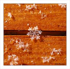 The bridge (Alin Balanean) Tags: snowflake copyright macro snowflakes alin nikond80 tokina100mmf28atxprod tokinaaf100mmf28macro balanean