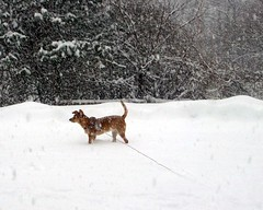 Sophie_snow11809