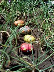 Redos tomando distancia xD (º-ºFabrica Mutanteº-º) Tags: chile selva colores arena manual fila fabrica perdidos vegetales caminando mutante distancia plasticina primmo