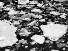 in the mood for ice (gallmese) Tags: winter blackandwhite bw berlin ice germany deutschland fromthewindow schwarzweiss spree eis jg fischerinsel eiskalt tl nmetorszg icedrift feketefehr czarnobiay eisstreiben kurvahideg arcticdejavueberlin