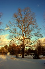 Brisk (SolsticeSol) Tags: winter snow cold tree clouds shadows michigan sunrays lowclouds winterlight winterscape winterlandscape snowyday adamichigan michiganlandscape michiganlandscapes sunshiningonsnow cloudsandsnow