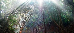 Is for All (anita anand) Tags: morning sunshine forest sunrays matheran blesssed