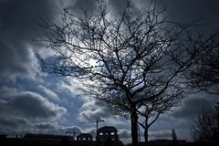 tree and sky2