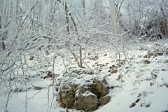 Rock behind house (junebug_1944) Tags: icestorm eurekaspringsar january2009