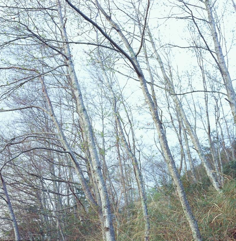 武陵農場_雪山登山口旁