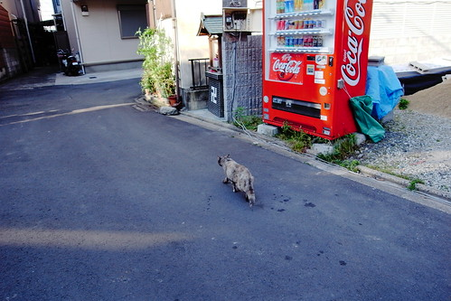 Today's Cat@20090520