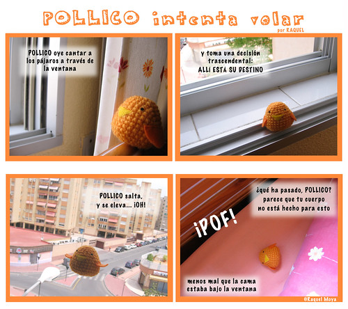 POLLICO intenta volar