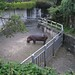 Taipei Zoo Injured Hippo