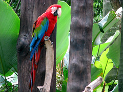 Parrot (A.T.E.F.E.H) Tags: canon parrot malaysia   atefeh   canons5is    sunwaylogon