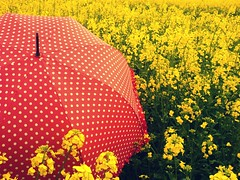 Hmmm, wonder if this is better..... (Her life in pictures) Tags: flowers red yellow umbrella