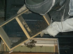 shake the bees into the hive