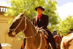 Elegancia gaucha (Eduardo Amorim) Tags: horses horse southamerica argentina criollo caballo cheval caballos cavalos pferde poncho cavalli cavallo cavalo gauchos pferd bit pampa loro riendas pala apero chevau