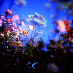 Bouquet (batabidd) Tags: pink flowers blue beautiful japan colorful artistic doubleexposure dreamy bouquet fakelomo collaboration nami