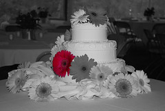 Black And White Photography of Flowers With Color White Black Flower Color