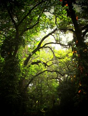 Trees Reaching For More vignette- Explore #99 (Chris C. Crowley- Editing for the next month or so) Tags: nature explore usaunitedstatesofamerica freenature showcaseonepicaday scenicsnotjustlandscapes darkvignettes sugarmillgardens2 treesreachingformorevignette