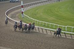 And its Da' Tara breaking away... (Dr.DeNo) Tags: horse ny newyork june belmont racing horseracing 2008 stakes deno