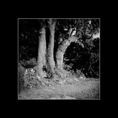LubiElba #5 (ErreDi) Tags: alberi natura bn lubitel marinadicampo isoladelba medioformato