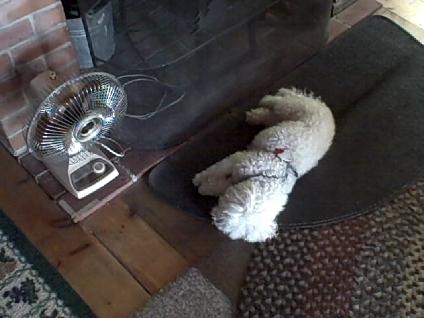 Dog On Hearth
