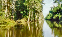 new orleans swamp cruise004 (litlesam1) Tags: neworleans bayou swamps cypresstrees louisianna