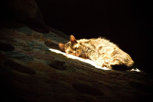 Amelie napping in a sunbeam