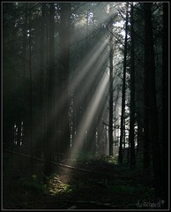 Naturerays (D.Reichardt) Tags: light tree nature fog forest ray mystic watcher blueribbonwinner topofthefog picturefantastic redmatrix pfevergreen primevalforestgroups pfbeams