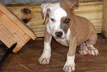 Kinship Circle - 2008-09-25 - Denham Springs LA Animal Shelter 03 by smiteme