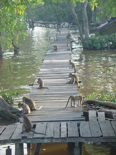 monkey way