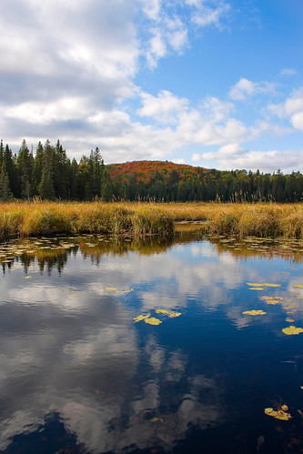 Explore the vast expanse of Algonquin Park this weekend (photo by Craig Moy).
