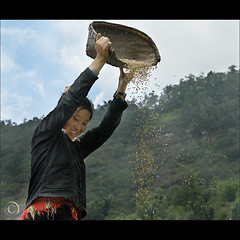 Hmong Rice sifting in Sa Pa (NaPix -- (Time out)) Tags: family red portrait black mountains women asia southeastasia rice farming working harvest vietnam explore panning sapa hmong sifting explored explorefrontpage sapavillage imagepoetryimageposie napix ricepanning