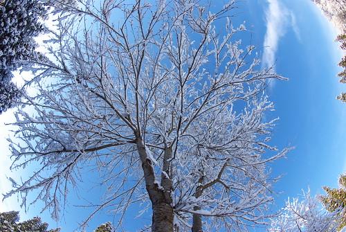 20081207077雪明け