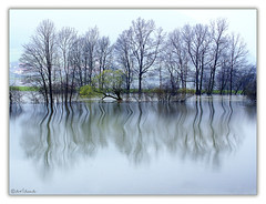 Rainy time (aviana2) Tags: trees lake reflection water rain landscape flood meadow slovenia rainy swallow overflow unica postojna blueribbonwinner planina specland sonyalpha100 platinumphoto theunforgettablepictures theperfectphotographer aviana2 planinskopolje fotocompetitionbronze
