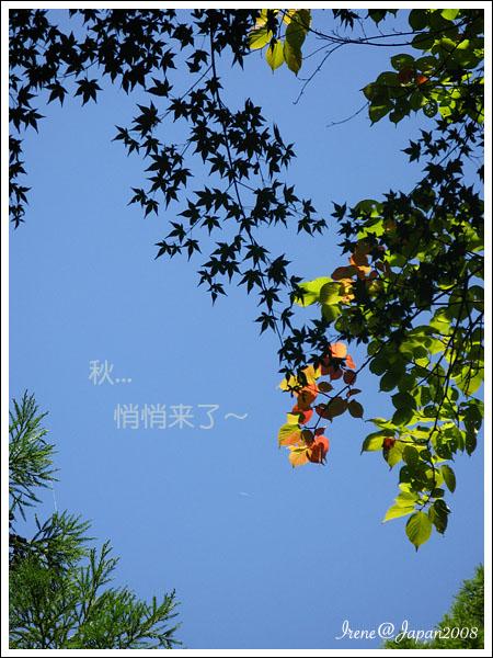 081214_29_鞍馬寺
