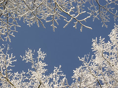 Im dreaming of... (rogiro) Tags: christmas blue wallpaper white snow black tree freeassociation forest circle hope december branch branches group card change obama inauguration seetrough