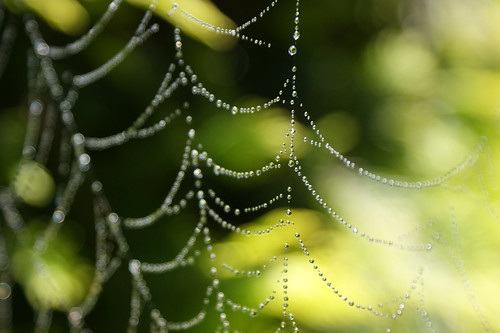 Droplets on Spider's web - by Michael Scott