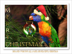 Merry Christmas To Everyone. (Barbara J H) Tags: bird lorikeet rainbowlorikeet merrychristmas australianbirds australianwildlife australiannativebird birdsofaustralia christmasgreetings featheryfriday animaladdiction wildlifeofaustralia barbarajh countdownto2009yourdiary