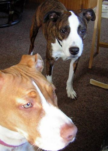 Sam & mystery dog, begging