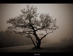 Solitude (stu72) Tags: cold misty solitude frosty d80 stu72