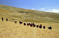 Descending Lamma La ,Tibet (reurinkjan) Tags: 2002 yak nikon tibet everest dri tingri jomolangma tibetanlandscape lammala janreurink yakdrivers phyugsrdzi norrdzi བོད། བོད་ལྗོངས།
