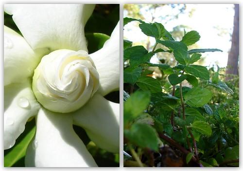 Heaven scent...