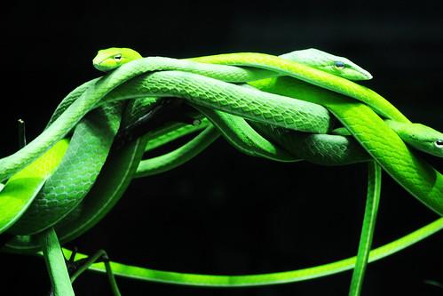 Green snaaaaakes