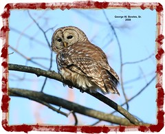 Barred Owl by George W. Bowles, Sr. (georgesr58) Tags: road county camp scott george searchthebest indiana southern mexican owl bowles barred ias impressedbeauty mpressedbeauty avianexcellence
