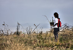 pendeli:  volunteer reforestation project (helen sotiriadis) Tags: mountain tree forest canon fire athens greece volunteer hdr reforestation photomatix penteli canonef100mmf28macrousm pendeli canoneos40d toomanytribbles